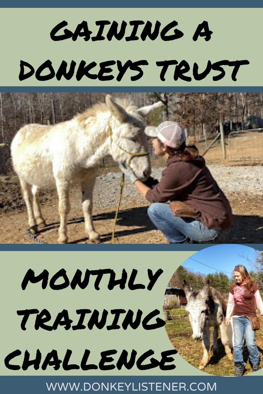 donkey training how to gain a donkeys trust