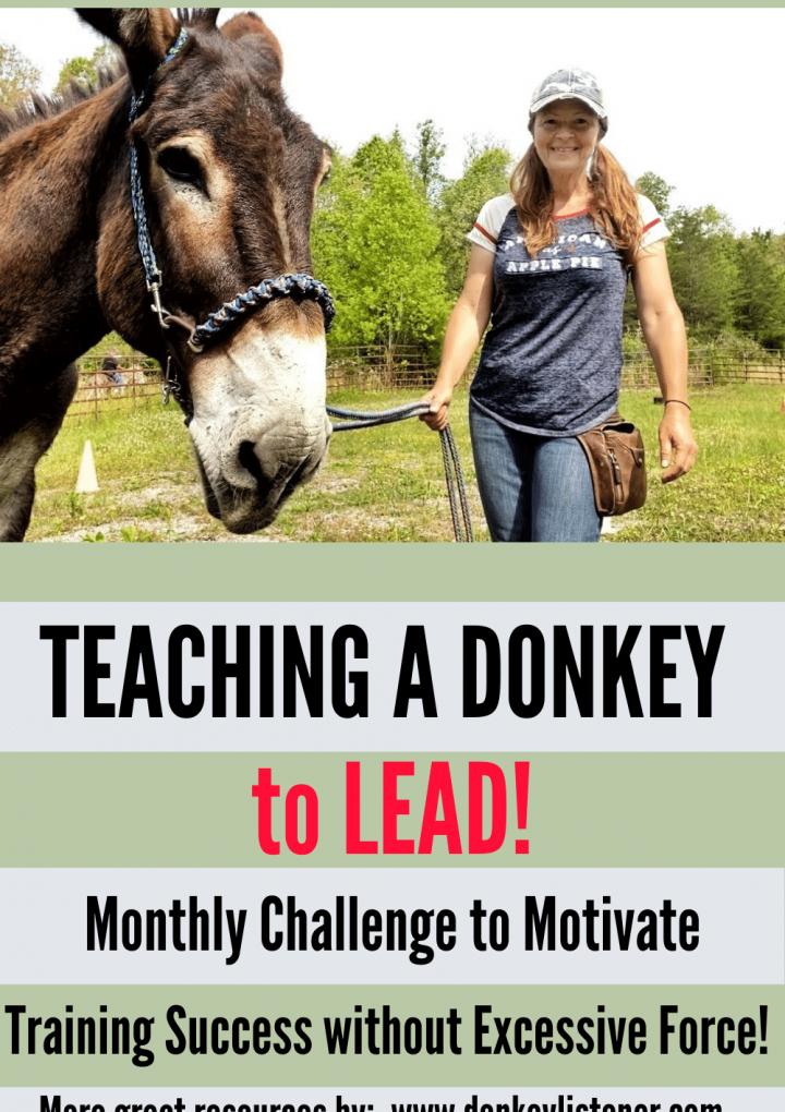 How do you teach a donkey to lead?