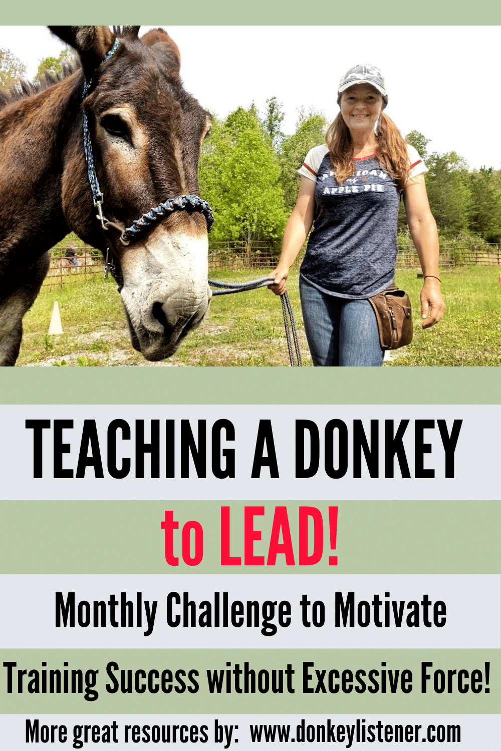 how to teach a donkey to lead