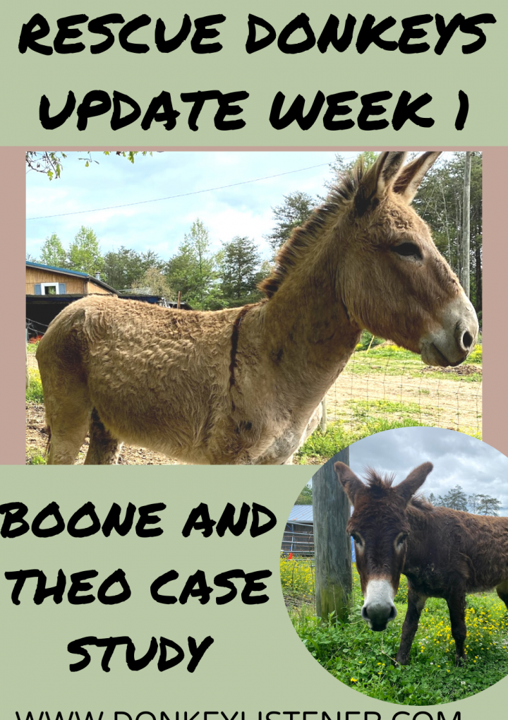Rescue Donkey Update: Boone and Theo