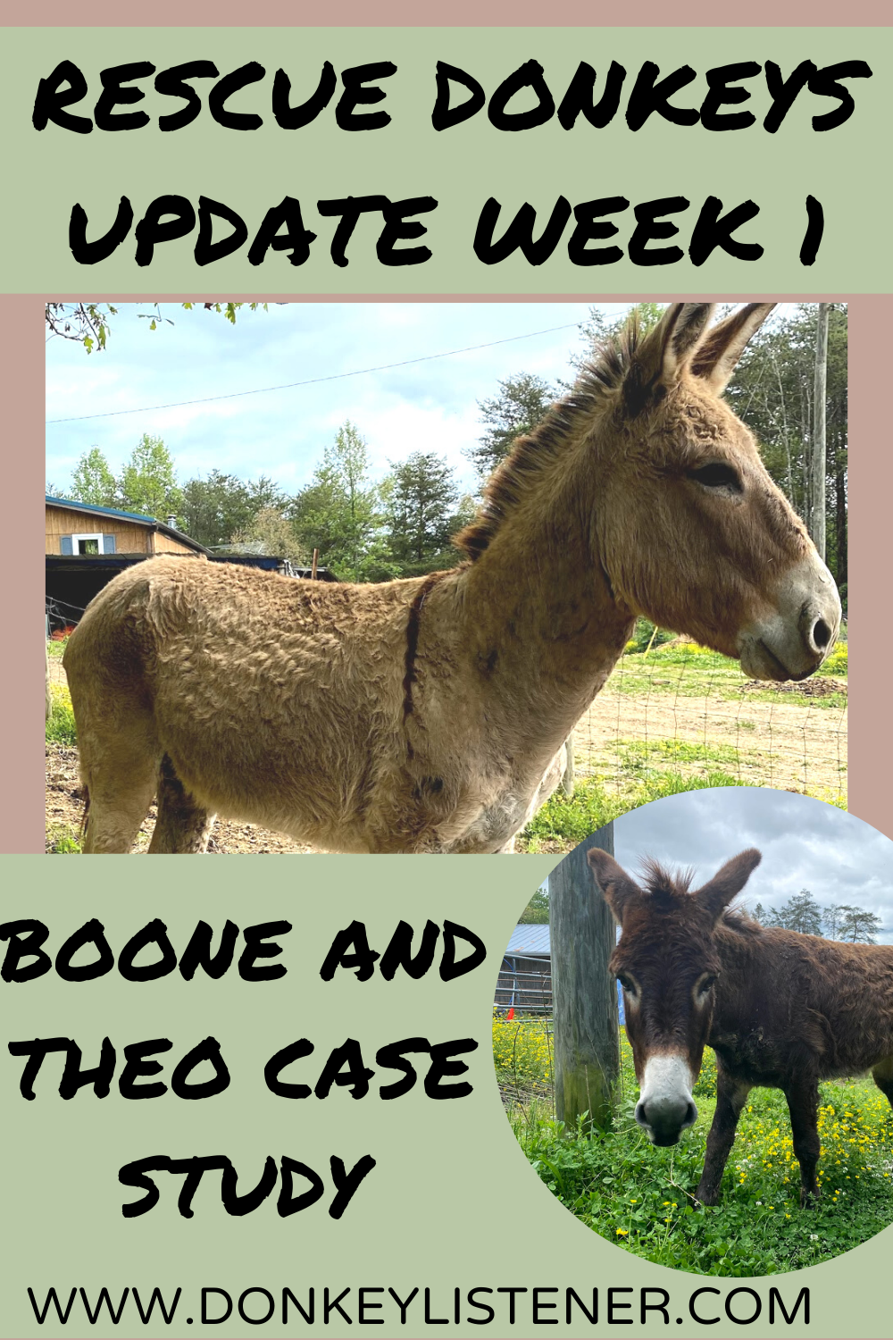 rescue donkey tennessee