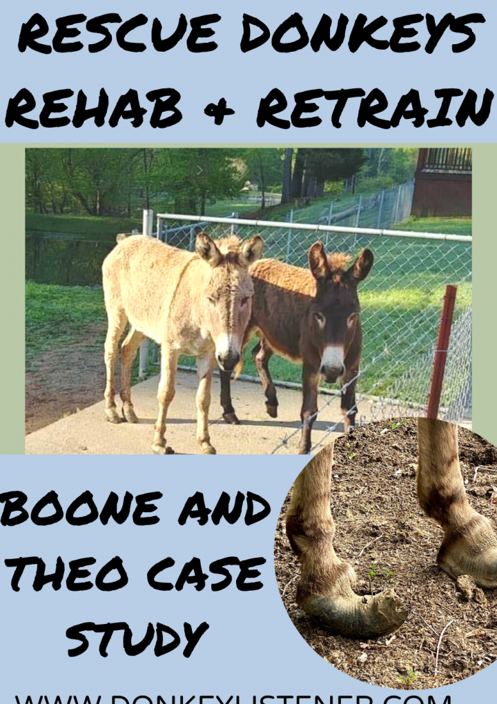 Rescue Donkeys Case Study of Theo and Boone
