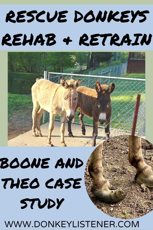 Rescue donkey training