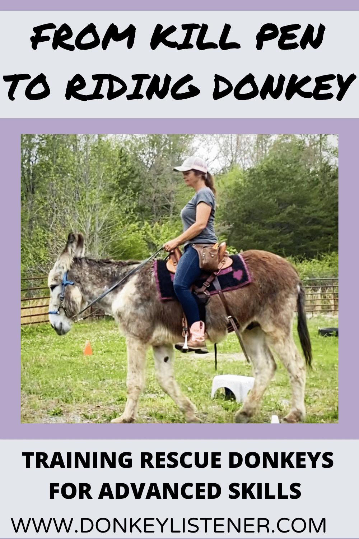 riding donkey saddle donkey