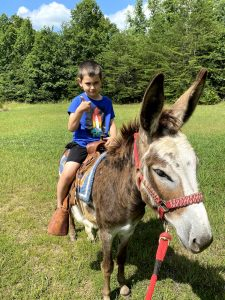donkey for sale in tennessee
