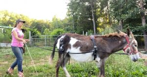 donkeys for sale tennessee
